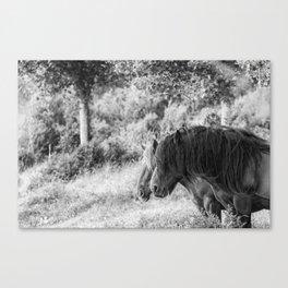 Pair of horses Canvas Print