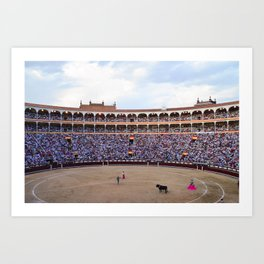 Bull Fight Art Print