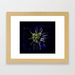 Pot Botany at the Laurels 3 Framed Art Print