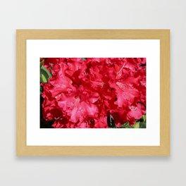 Rhododendron Tree Framed Art Print