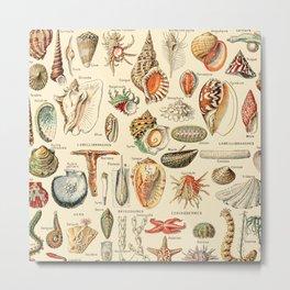 Seashell Diagram // Mollusques by Adolphe Millot XL 19th Century Science Textbook Artwork Chart Metal Print
