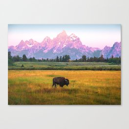 Grand Tetons Bison Canvas Print