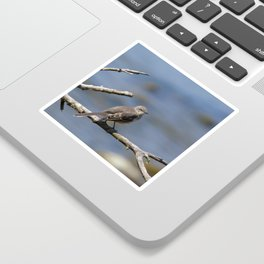 Northern Mockingbird Sticker
