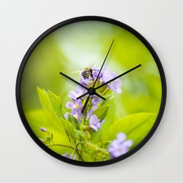 Blue-banded Bee Wall Clock