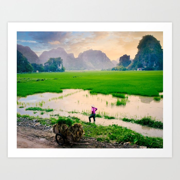 Paddy Fields Sunset Fine Art Print  • Travel Photography • Wall Art Art Print