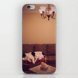 Dog in Luxury iPhone Skin
