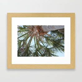 Palmetto Framed Art Print