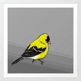 Goldfinch Art Print
