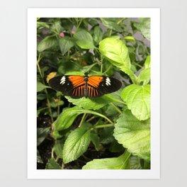 Black and Orange Beauty #1 Art Print