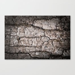 Texture - a bark of old oak with moss Canvas Print