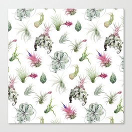 Tillandsia white Canvas Print