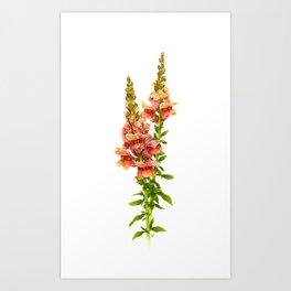 Snapdragon Art Print