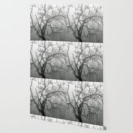 Black and white naked tree Wallpaper