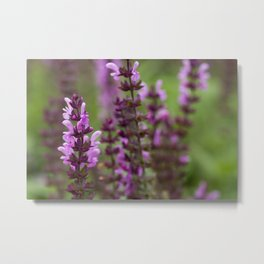 Pink Bartsia Flowers - Original Botanical Nature Photography - Flora Art  Metal Print