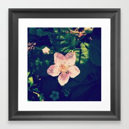 Blackberry Flower Framed Art Print