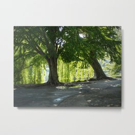 Boston Willows Metal Print