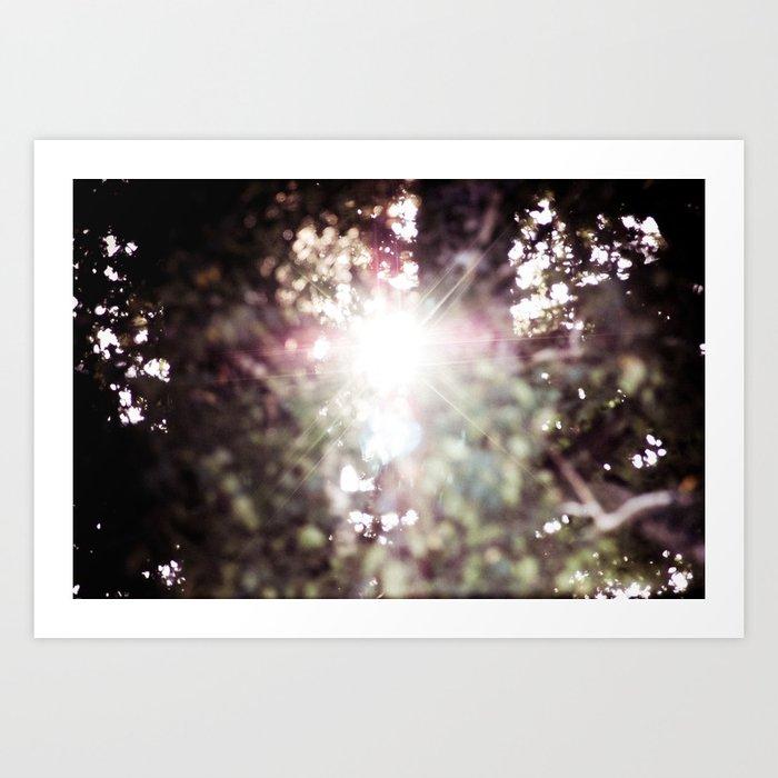 New light through an old tree Art Print