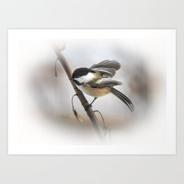 January Chickadee Art Print