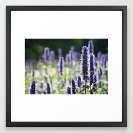 purple flags Framed Art Print