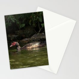 Red-faced Muscovy Duck Stationery Cards