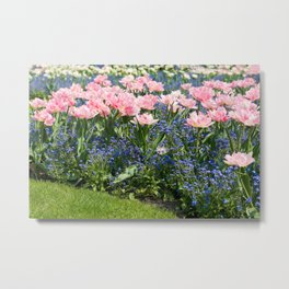 Foxtrot tulips blooming in garden Metal Print