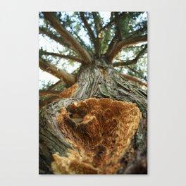 Nature's Beauty Canvas Print