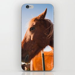 Horse. Palo Duro Canyon, Texas. iPhone Skin