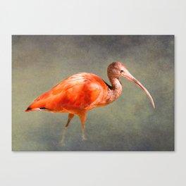 The Scarlet Ibis Canvas Print