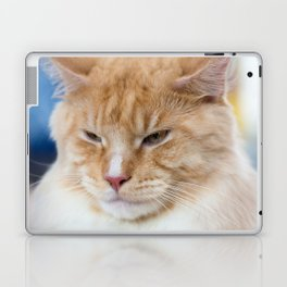 Red-white tabby Maine Coon cat Laptop & iPad Skin