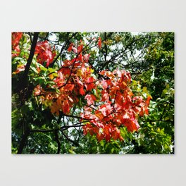Fall is Here Canvas Print