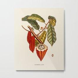 Vintage Cocoa Bean Botanical Illustration Metal Print