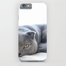 Beautiful Scottish Fold cat curled up on bed iPhone Case