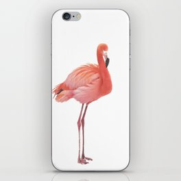 FLAMINGO IN THE SNOW iPhone Skin