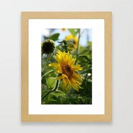 Soulshine Framed Art Print