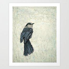 Canada Gray 1 Art Print