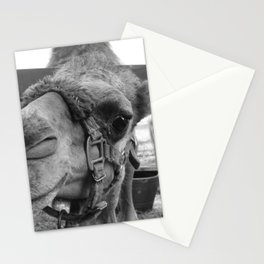 HuMp DaY part II Stationery Cards