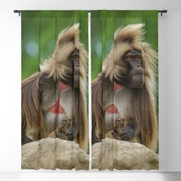 Gelada Sitting In The Wind Blackout Curtain