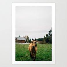 Horse // Oregon Art Print