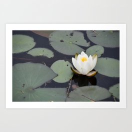 Secret Water Lily Art Print