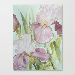 Lavender Beauties (irises) Canvas Print