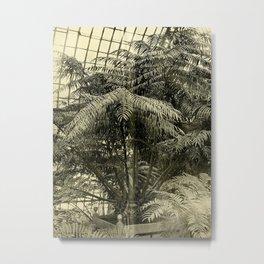 Angiopteris Tevsmanniana Metal Print