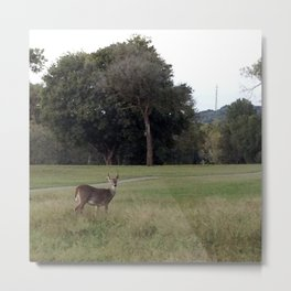 Stoney Brook Deer Metal Print