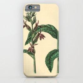 Flower lobelia speciosa29 iPhone Case