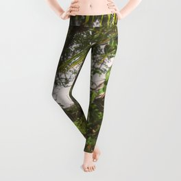 Pura Vida Costa Rica Jungle Life Caribbean Type Leggings