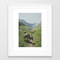 cows Framed Art Prints featuring cows by remo
