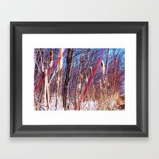 PussyWillows Framed Art Print