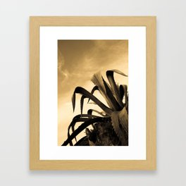 Giant Sepia Aloe Cactus Plant Photograph Art Print Framed Art Print