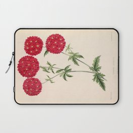 Verbena Lustrous Vintage Floral Flower Hand Drawn Scientific Illustration Laptop Sleeve