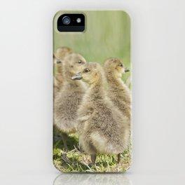 Goosey, Goosey, Goslings iPhone Case