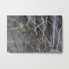 early spring Metal Print